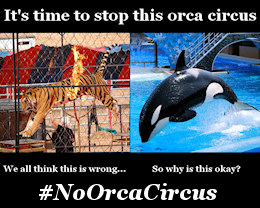 Say NO to the orca circus