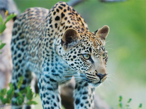 Kruger, coast and cape holiday in Southern Africa