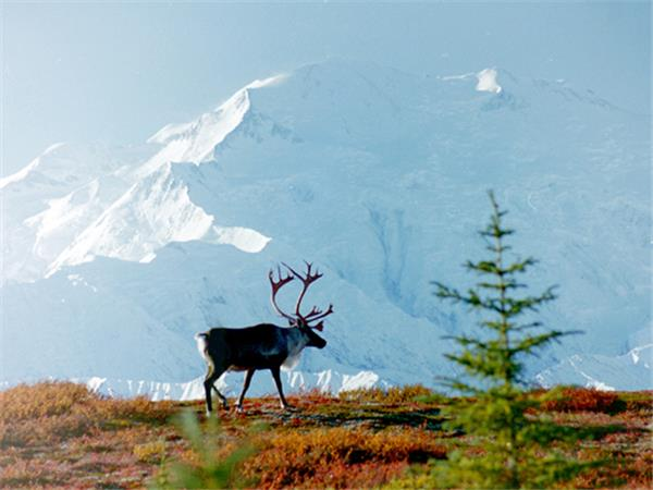 Holiday in Alaska, wildlife and wilderness