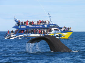 Kaikoura whale watching trips in New Zealand