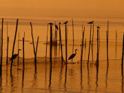 Birds at Albufera nature park, Valencia. Photo by Valencia Tourist Board