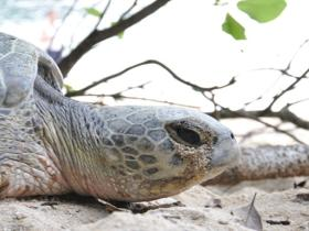 Help with sea turtle conservation
