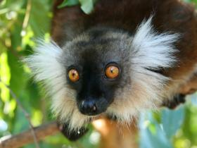 Madagascar family adventure holiday