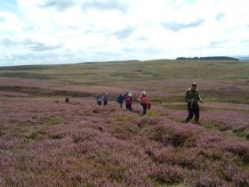 Heather clad moorland