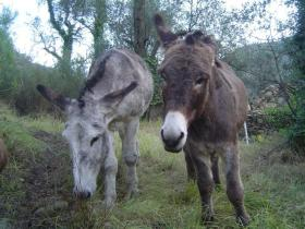 Our two beautiful donkeys, Benjamin and Cadichon
