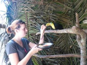 Volunteer feeding baby toucans