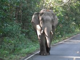 Elephant in Khao Yai National Park