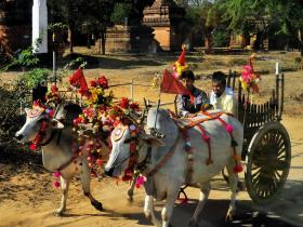 Ox cart off to a temple celebration, Bagan