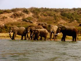 Take a weekend safari at nearby Queen Elizabeth National Park and see elephants, hippos and more