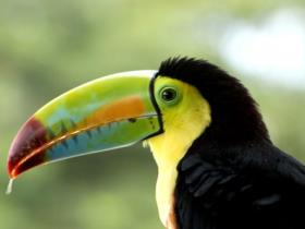 Family holiday to Costa Rica, 8 day wildlife and beach