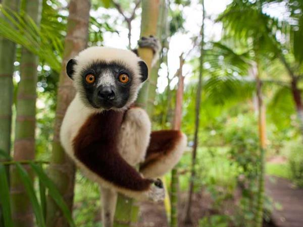 Madagascar tailor made honeymoon adventure