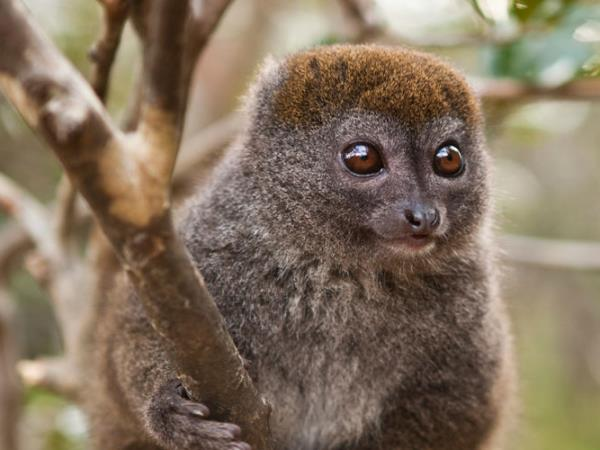 Madagascar holiday, Lemurs, canals & mountains