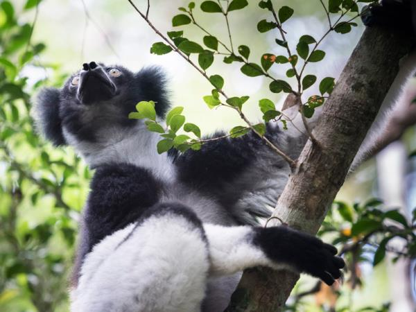 Southern Madagascar holidays, Lemurs, baobabs & beaches