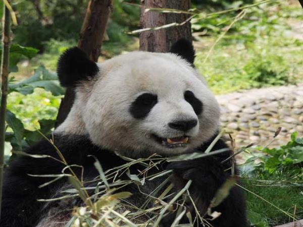 China tour, trekking & pandas