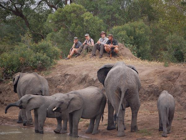 South Africa safari holiday, 14 days