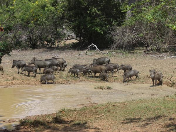 Wildlife holiday in Sri Lanka, private departure