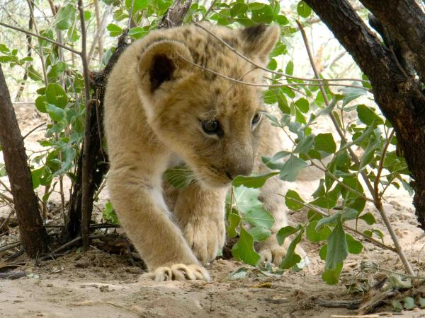 Botswana wildlife volunteering holiday