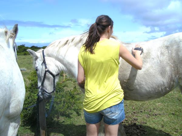 Horse rehabilitation project in South Africa