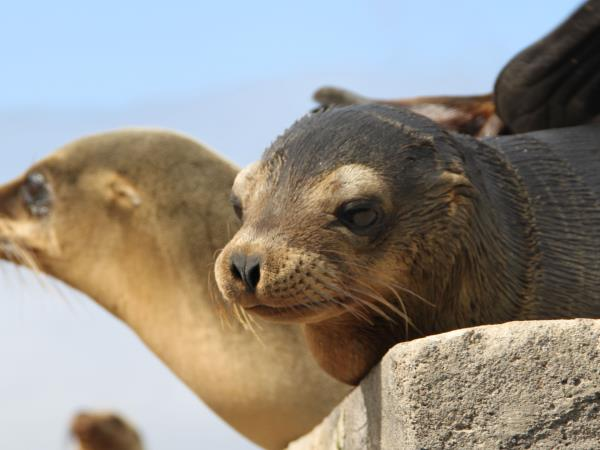 Galapagos luxury family adventure