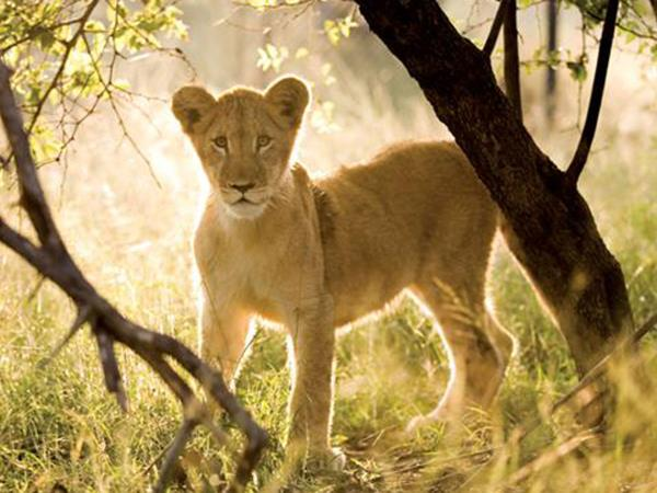 South Africa holiday & luxury safari