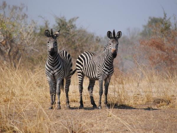 Malawi & Zambia culture and nature tour