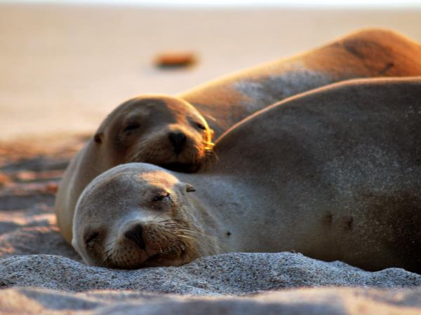 Ecuador and Galapagos family activity holiday