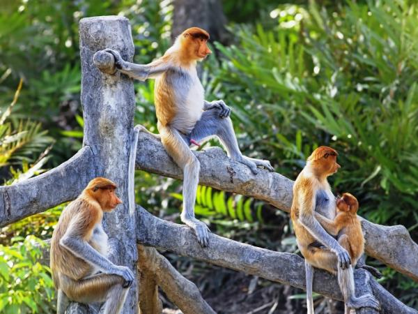 Highlights of Borneo group tour