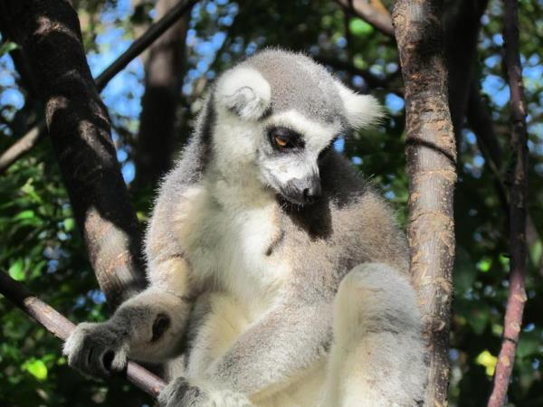 North Madagascar adventure and wildlife holiday