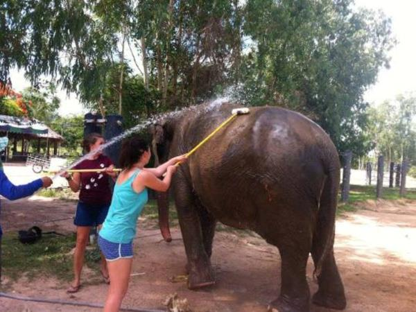 Family elephant refuge volunteering in Thailand