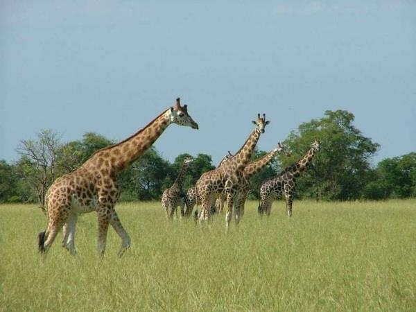 Uganda tailor made holiday