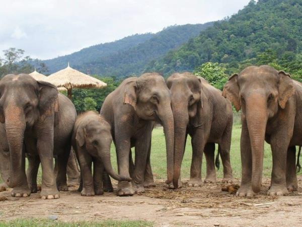 Family volunteering with elephants in Thailand