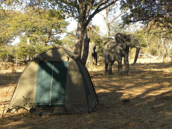 Botswana adventure holiday, wild camping