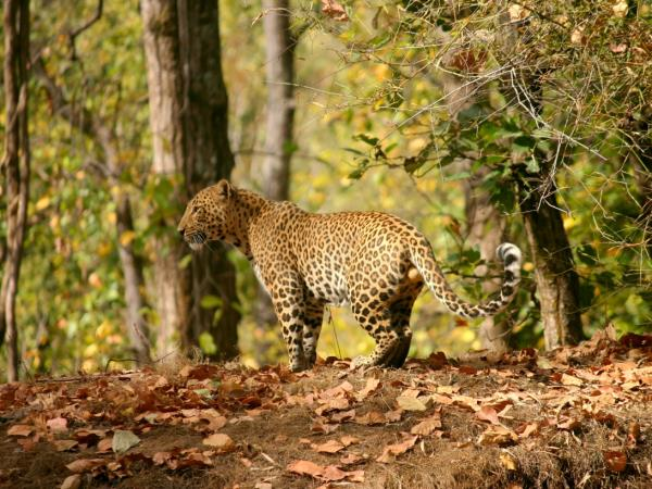Southern India wildlife holiday, tailor made
