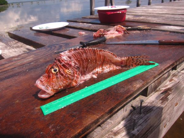 Lionfish culling project in Belize
