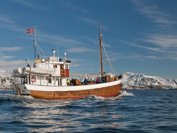 Lofoten Islands whale watching & fishing holiday, Norway