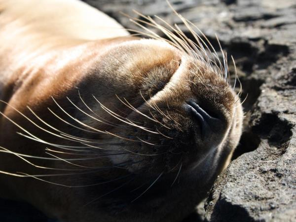 Galapagos activity & wildlife holiday, land based