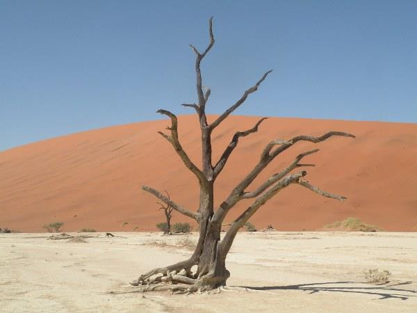 Southern Namibia self drive holiday, desert eco-systems