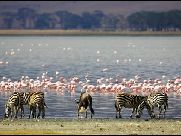 Tanzania Luxury safari holiday