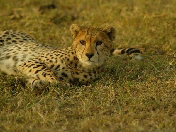 Tanzania highlights holiday