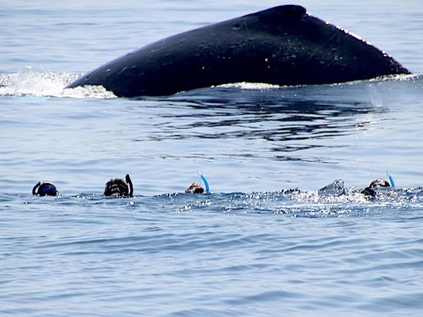 Humpback whale adventure in tropical Tonga