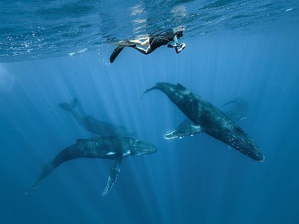 Humpback whale photography expedition, Tonga