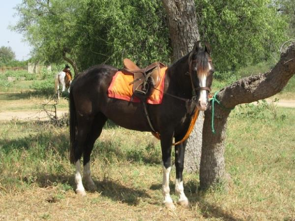 Horse riding holiday in Rajasthan, India
