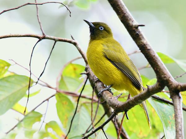 Andaman Islands India Bird watching holidays
