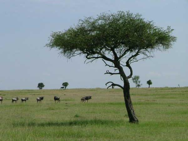 Kenya safari & beach holiday, tailormade