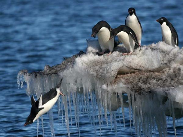 Fly and cruise Antarctica holiday