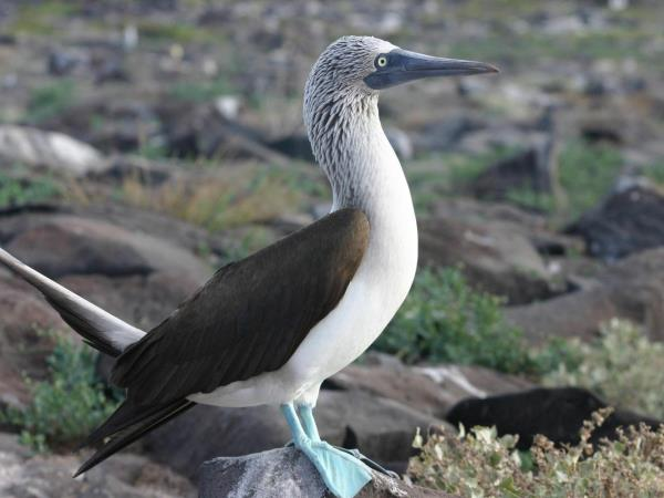 Galapagos holiday cruise options