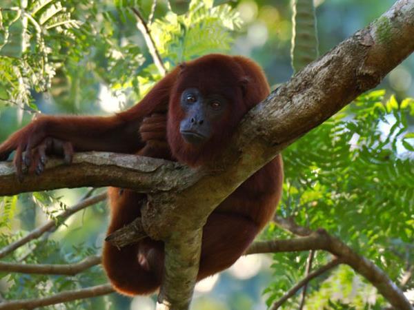 Amazon rainforest monkeys