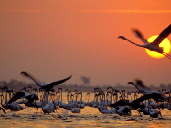 Gujarat holiday and the Rann of Kutch, India