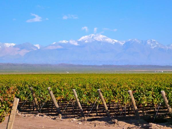 Mendoza wine tour in Argentina