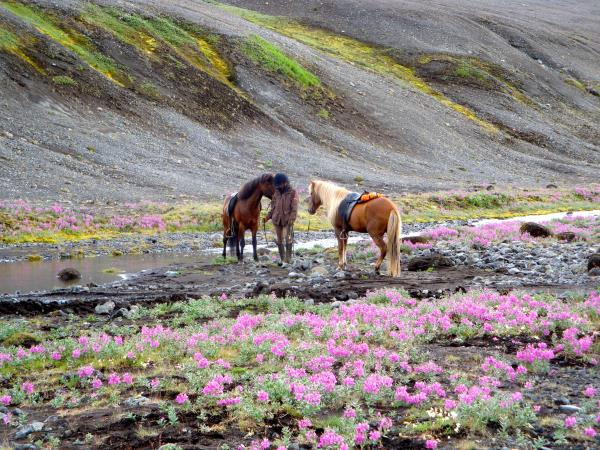 Horse riding holiday in Iceland